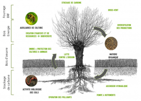 image schemaagroforesterieservices.png (0.6MB) Lien vers: http://www.agroforesterie.fr/definition-agroforesterie.php