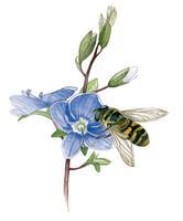 syrphe Lien vers: http://www.terrevivante.org/240-insectes-auxiliaires-les-allies-du-jardinier.htm