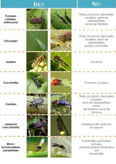 tableauaux Lien vers: http://agriculture.gouv.fr/sites/minagri/files/documents/pdf/aa103_p12-21_cle0f8eaf.pdf