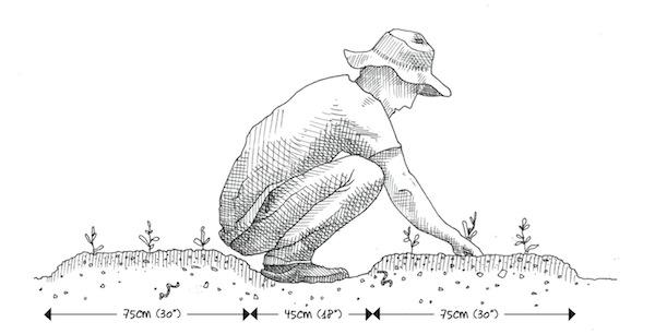 image 7_espacement__copie.jpg (38.2kB) Lien vers: http://ecosociete.org/livres/le-jardinier-maraicher