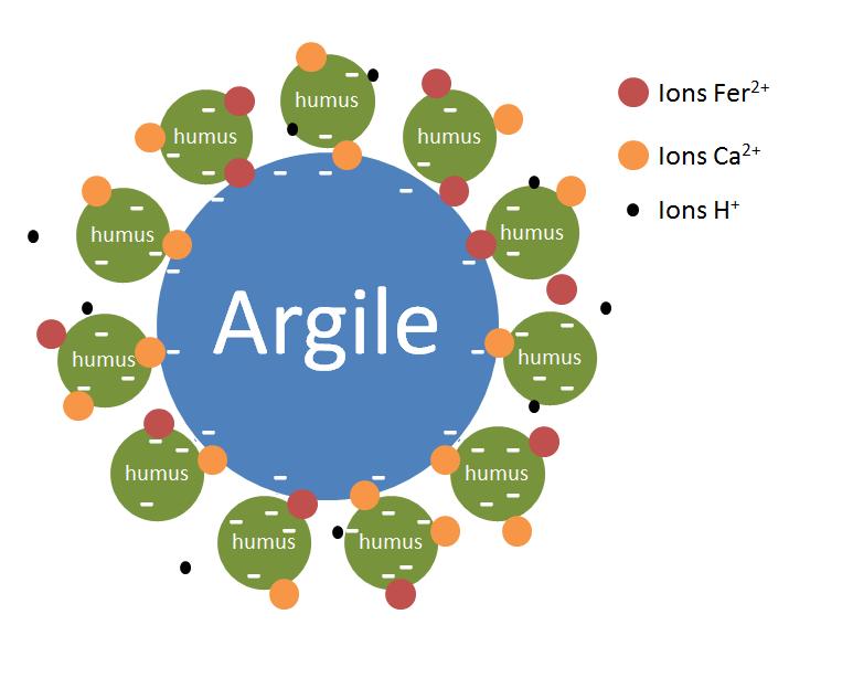 image Complex_argilohumique.png (36.8kB)