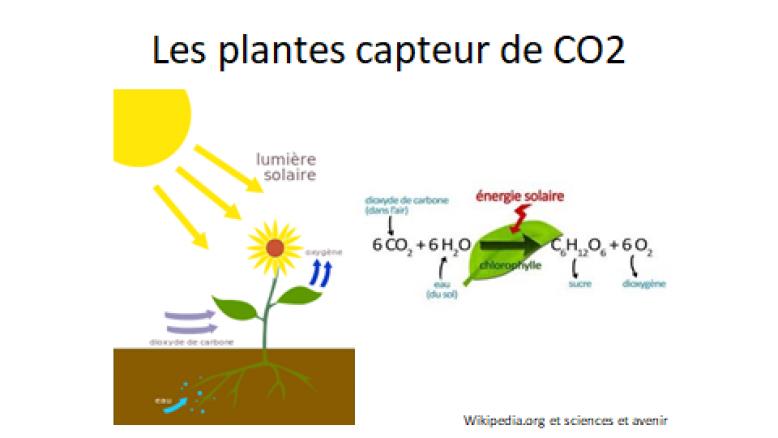image Les_plantes_capteur_de_CO2.png (37.2kB)