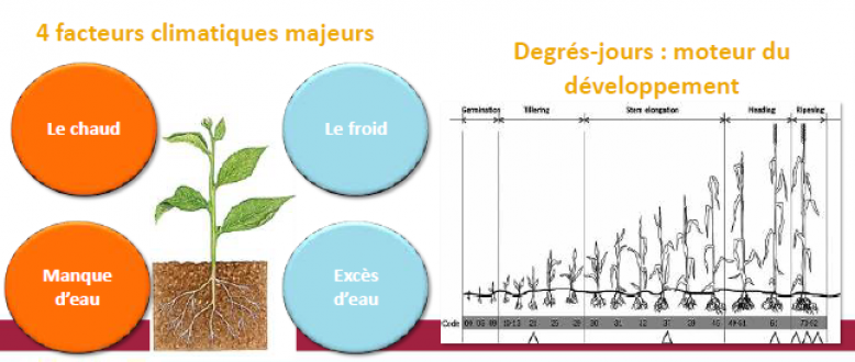 image Schema_facteurs_climatiques_culture_Solagro.png (0.1MB)