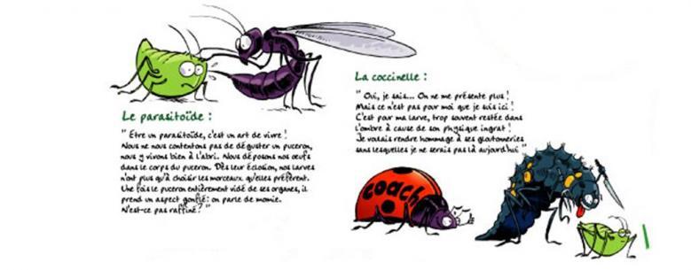 paracocci Lien vers: http://www.loiret-nature-environnement.org/zero-pesticide/outils/expo-zero-pesticide.html