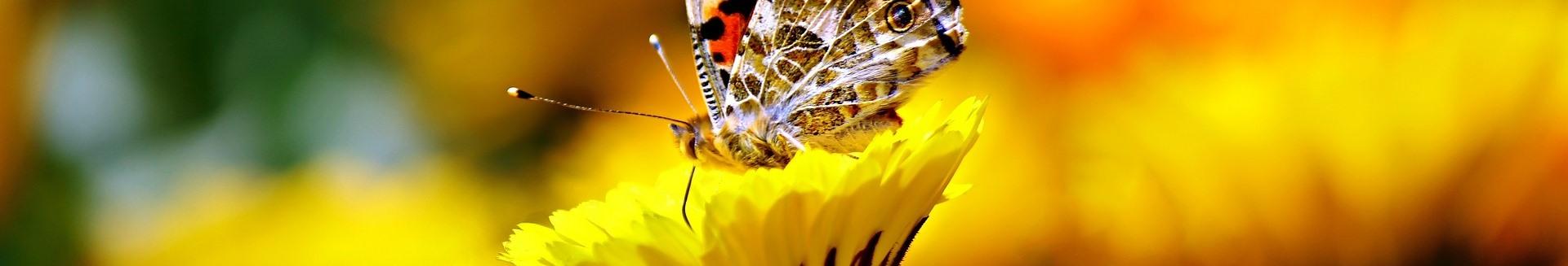 image butterfly169924_1920.jpg (95.5kB)