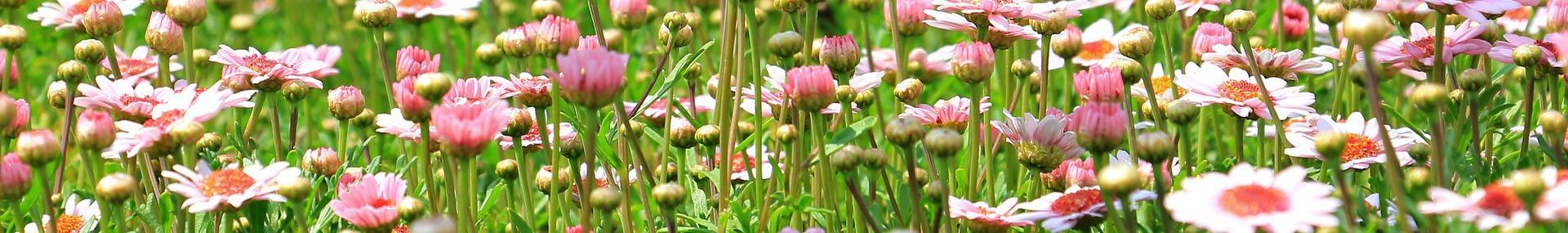 image flowermeadow1510602_1920ConvertImage.jpg (0.2MB)