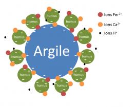 image Complex_argilohumique.png (36.8kB) Lien vers: ?ComPlexe